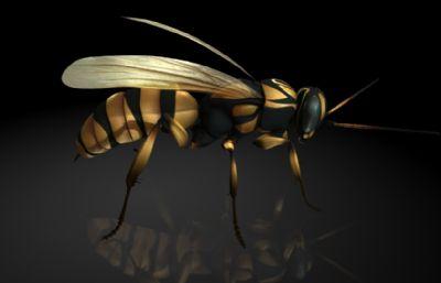 沙漠蛛蜂,狼蛛��,蜘蛛��胡蜂,�S蜂MAYA高精模型,MB,FBX,OBJ等格式