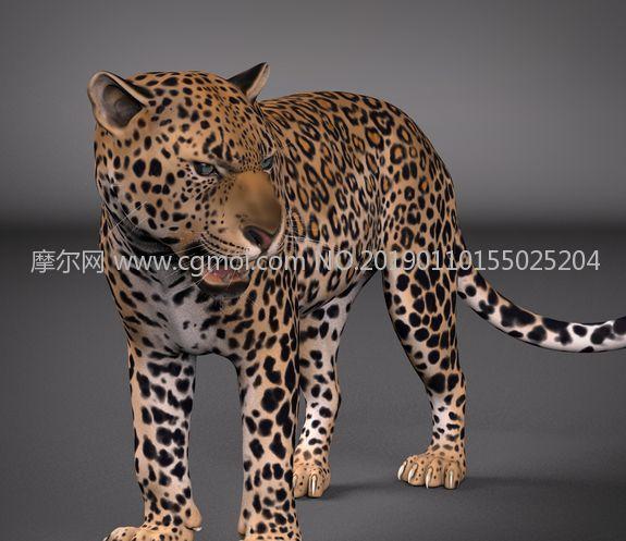 影视级花豹maya模型,带绑定,有贴图