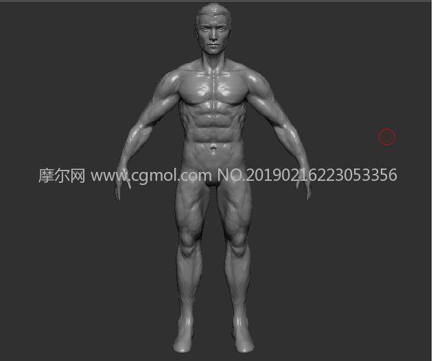 男人A pose,男人体ZTL模型