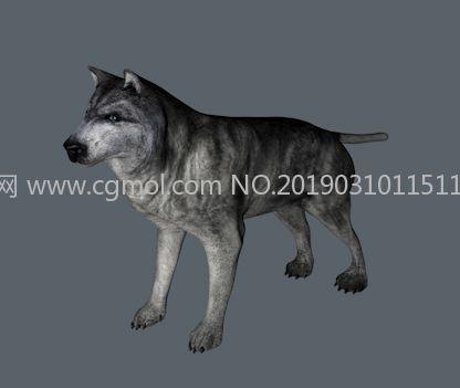 狼C4Dr15模型