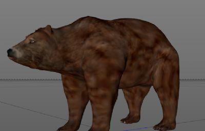 棕熊C4Dr15模型
