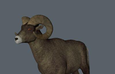 羚羊,山羊C4Dr15模型