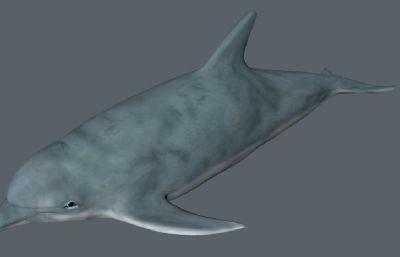 海豚C4Dr15模型