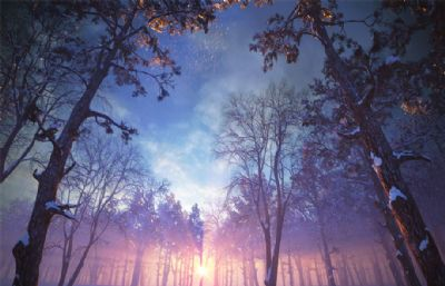 很美!冬季黄昏下的树林雪景max模型(网盘下载)