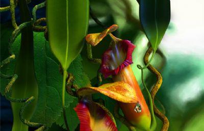 写实马来西亚猪笼草,瓶子草maya模型,带贴图