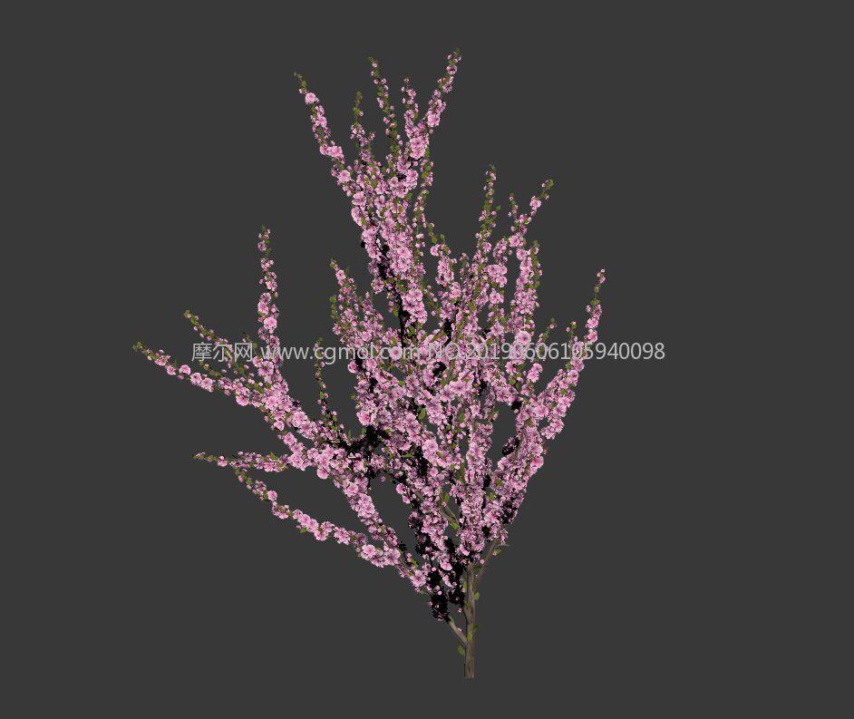 红叶小檗max模型