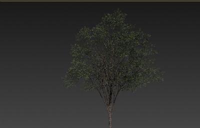��槐��max模型