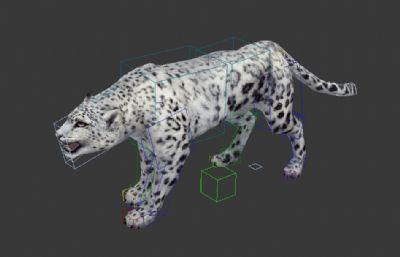 豹子雪豹max模型,带贴图,带绑定,带一套动作