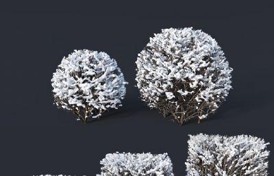 冬天�e雪厚的��,灌木雪��max模型,VRAY,corona���版本