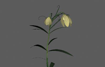浙贝母药材原植物FBX模型