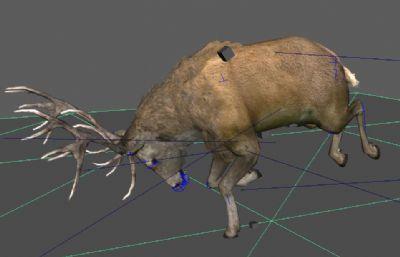 ��赢�和�定的����麋鹿maya模型