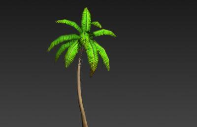 熱帶椰子樹3D簡模