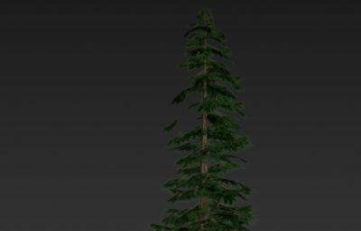 東北森林松樹3D模型