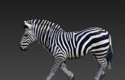 斑�R3D模型,��行走奔跑�幼�