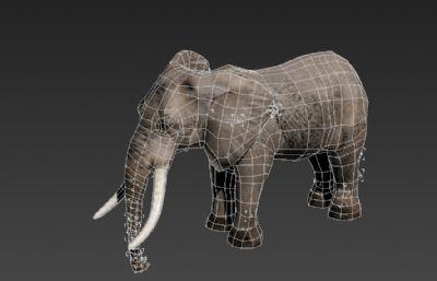 大象3D�模,有行走奔跑�幼�