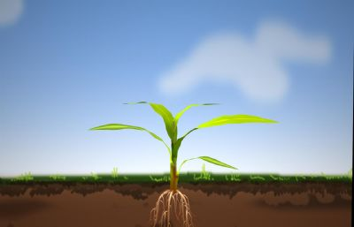 玉米植株,小玉米苗maya模型,带贴图