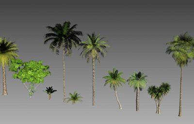 铁树,椰树等几种热带海滩植物3D模型