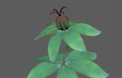 写实重楼原植物FBX模型