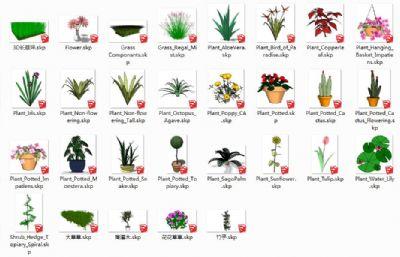 36款草地盆栽花草植物su模型