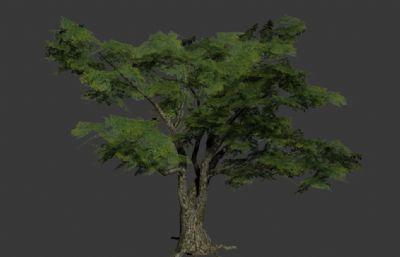 粗壮大树,游戏里的简模树3D模型