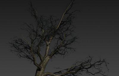 冬季干枯�淠�3D模型