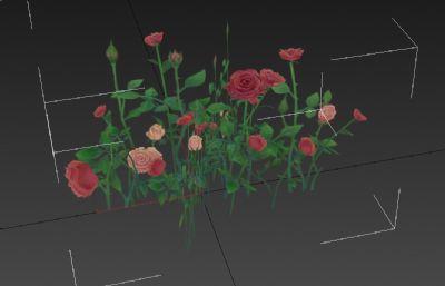 玫瑰花花��3D�模