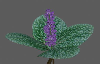 独一味中草药原植物FBX模型