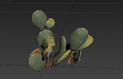 沙漠仙人掌3D模型