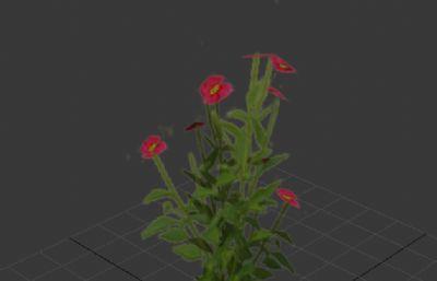 游�蛑械湍i_花的植物3D模型