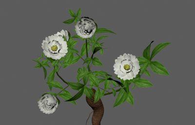 杭白芍,毫芍,川芍中草�植物FBX模型