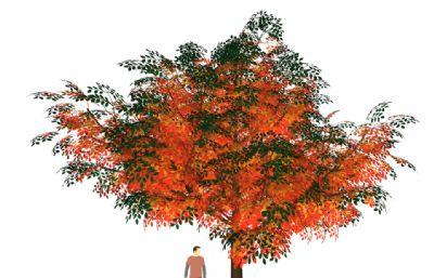 �t�~��,秋季��su模型