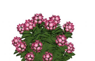 �t花盆栽,�t�C花球盆景su模型