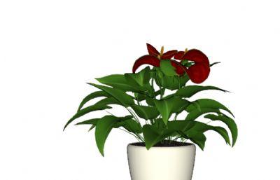 花�T盆栽su模型