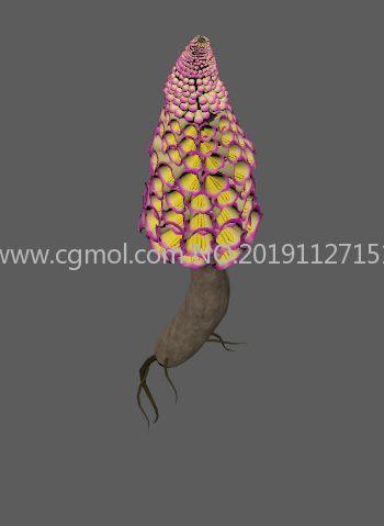 肉苁蓉,寸芸中草药原植物FBX模型