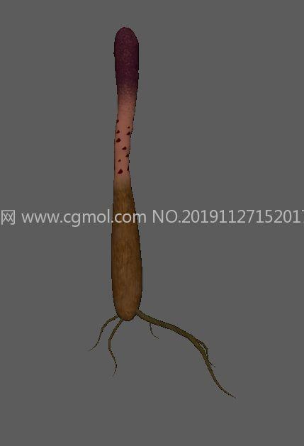 锁阳中草药原植物FBX模型