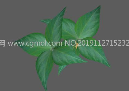 太子參中草藥原植物FBX模型