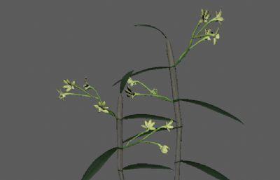 石斛,�魂草中草�原植物FBX模型