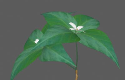 太子�⒅胁菟�原植物FBX模型
