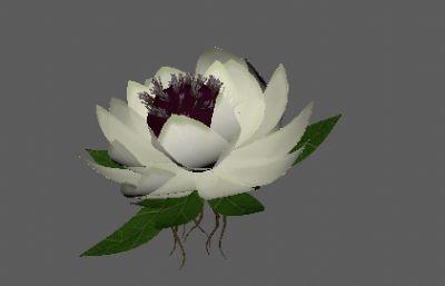 天山雪�原植物FBX模型
