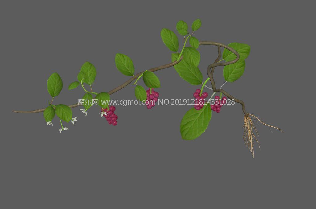 中草�五味子原植物FBX模型,有�N�D