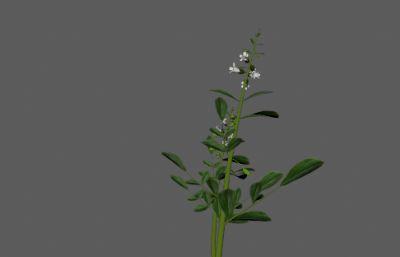 ����玄�⒃�植物FBX模型