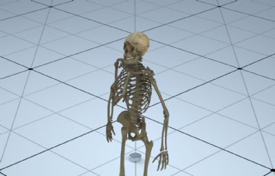 骷�t骨架,人�w骨骼 ,�群�C4D,MB,FBX文件,其中C4D有材�|,MB有�定