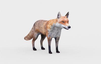 狐�3D模型,MAX,FBX�煞N格式