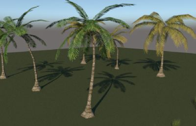 棕櫚科樹木su模型